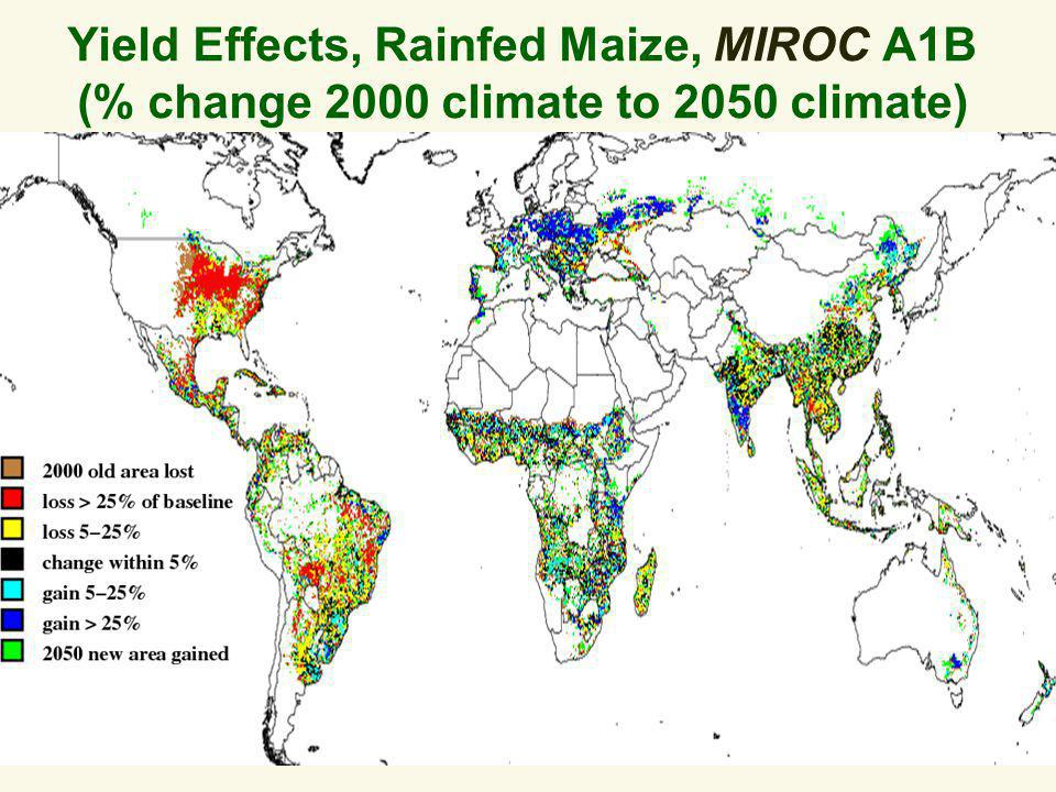 Yield Effects, Rainfed Maize, MIROC A1B (% change 2000 climate to 2050 climate)