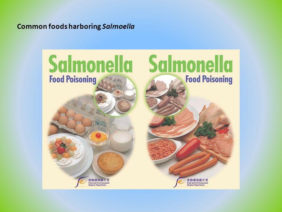 Common foods harboring Salmoella