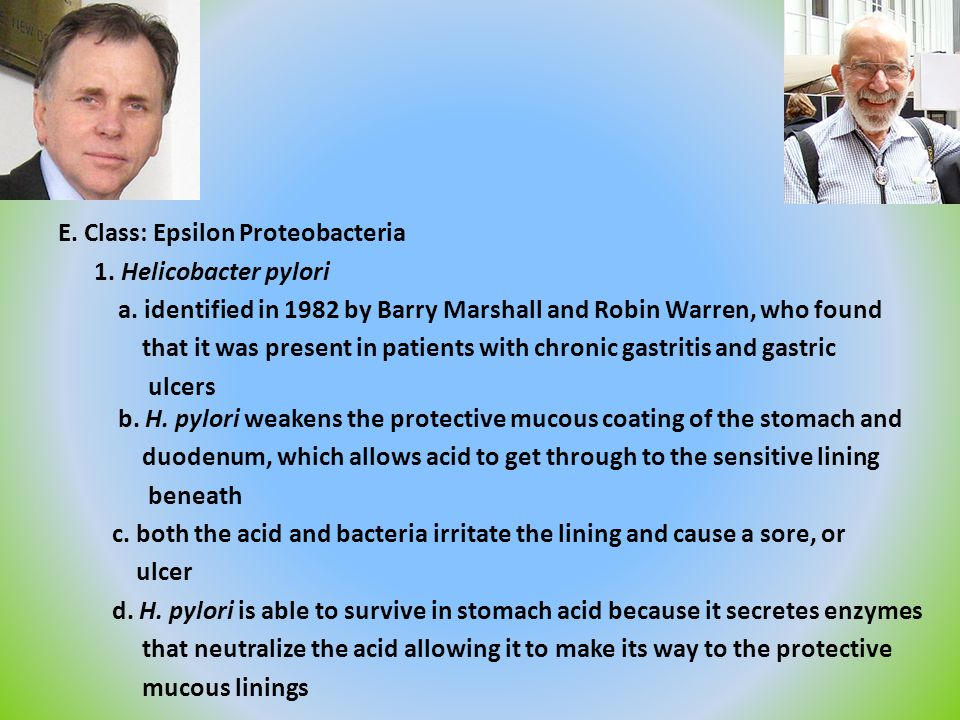 E. Class: Epsilon Proteobacteria 1. Helicobacter pylori a