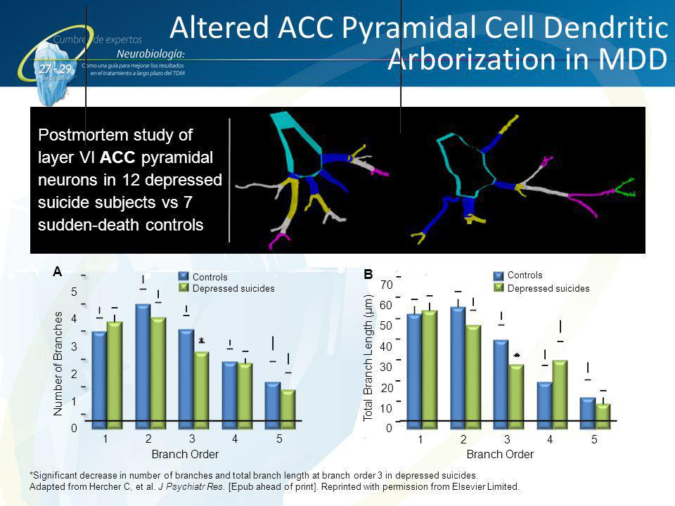 Altered ACC Pyramidal Cell Dendritic Arborization in MDD