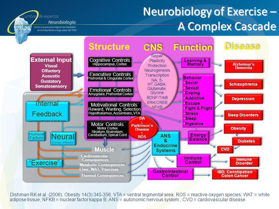 Neurobiology of Exercise – A Complex Cascade