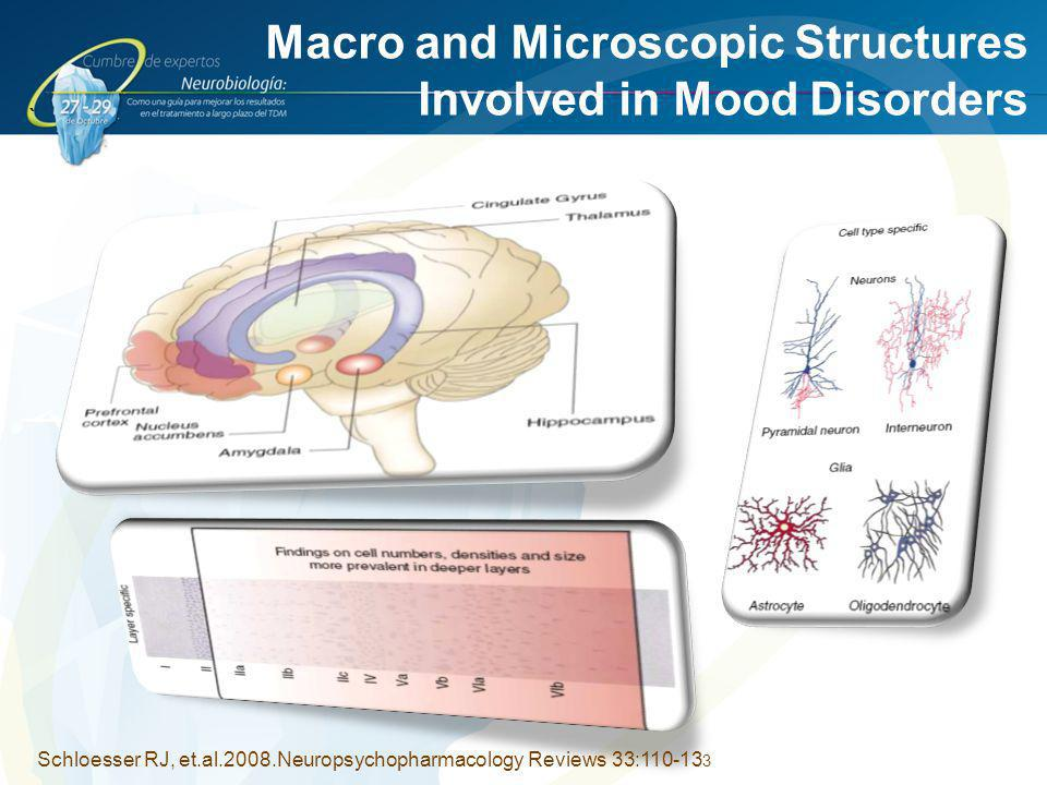 Macro and Microscopic Structures Involved in Mood Disorders
