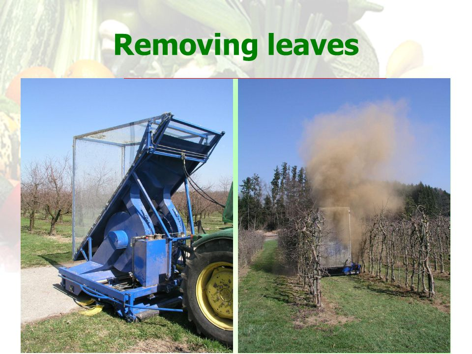 Removing leaves