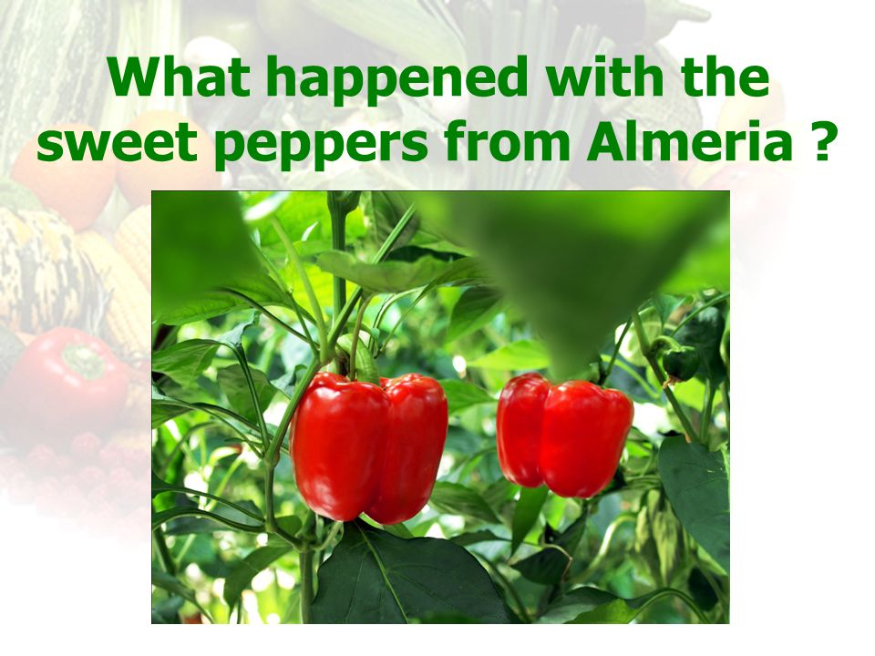 What happened with the sweet peppers from Almeria
