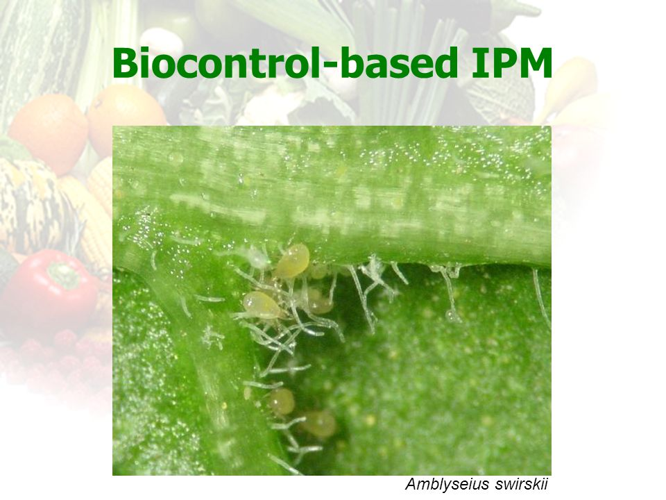 Biocontrol-based IPM Amblyseius swirskii