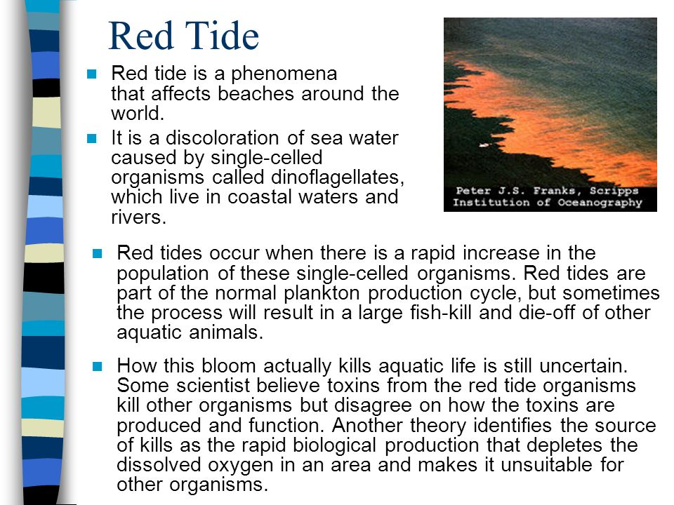 Red Tide Red tide is a phenomena that affects beaches around the world.