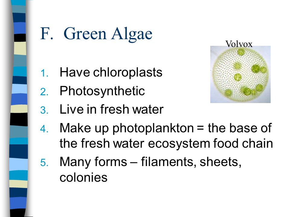 F. Green Algae Have chloroplasts Photosynthetic Live in fresh water
