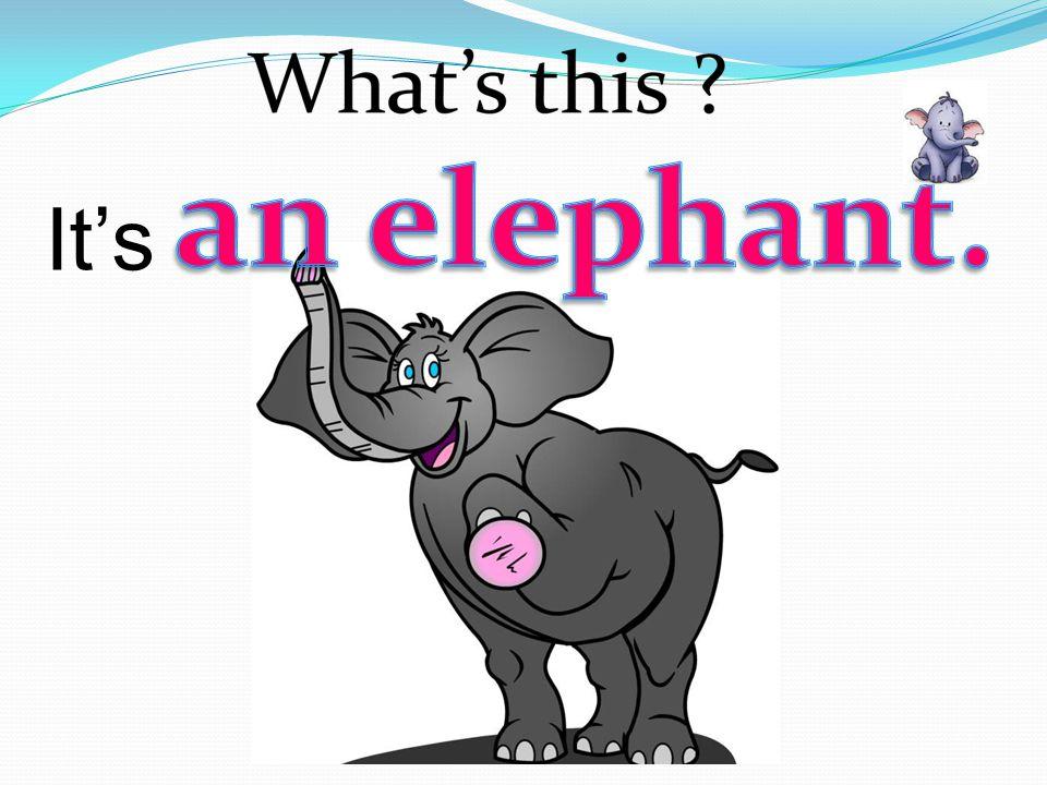 an elephant. It's