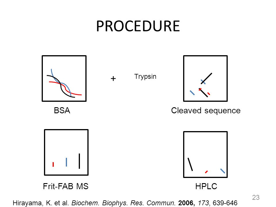 PROCEDURE + BSA Cleaved sequence Frit-FAB MS HPLC Trypsin