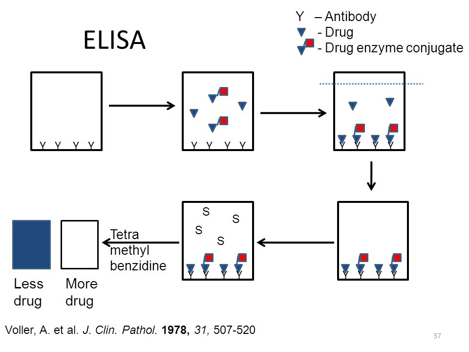 ELISA Less drug More drug Y – Antibody - Drug - Drug enzyme conjugate