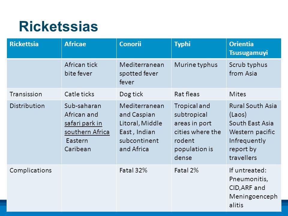Ricketssias Rickettsia Africae Conorii Typhi Orientia Tsusugamuyi