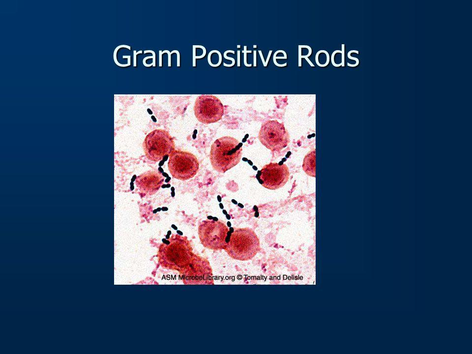 Gram Positive Rods