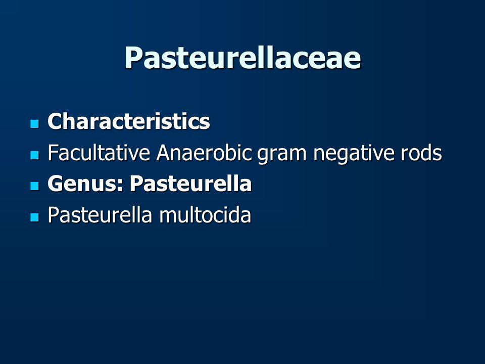 Pasteurellaceae Characteristics