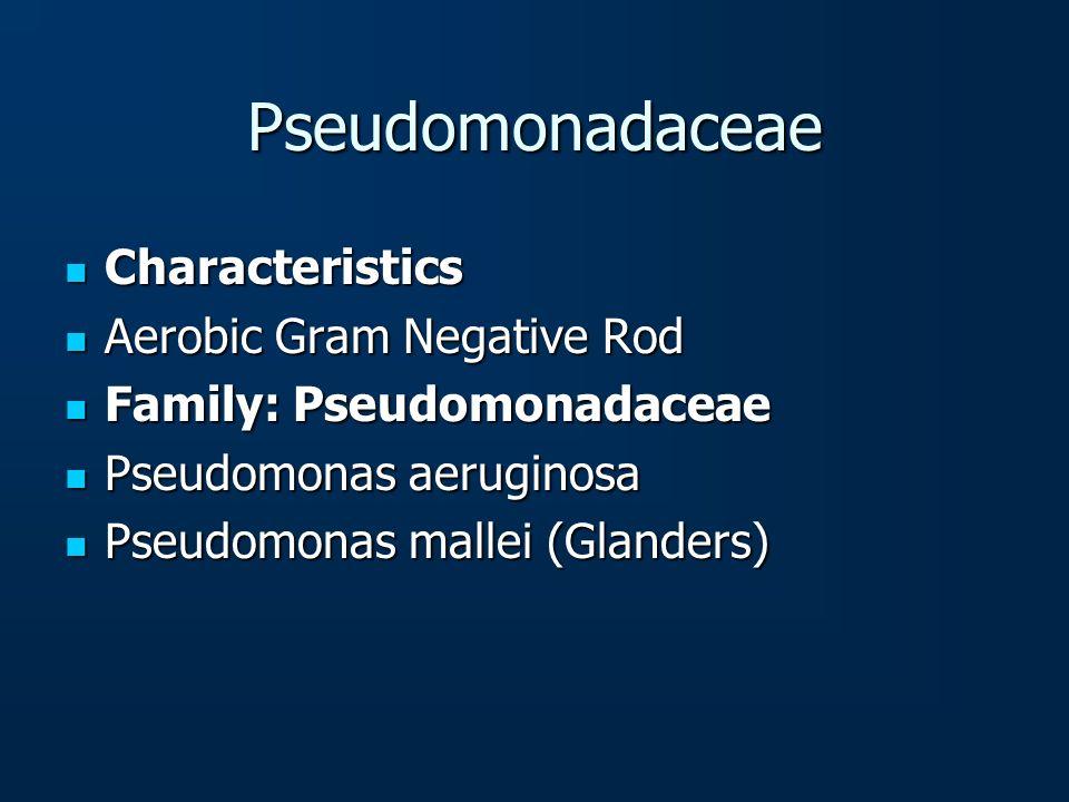 Pseudomonadaceae Characteristics Aerobic Gram Negative Rod