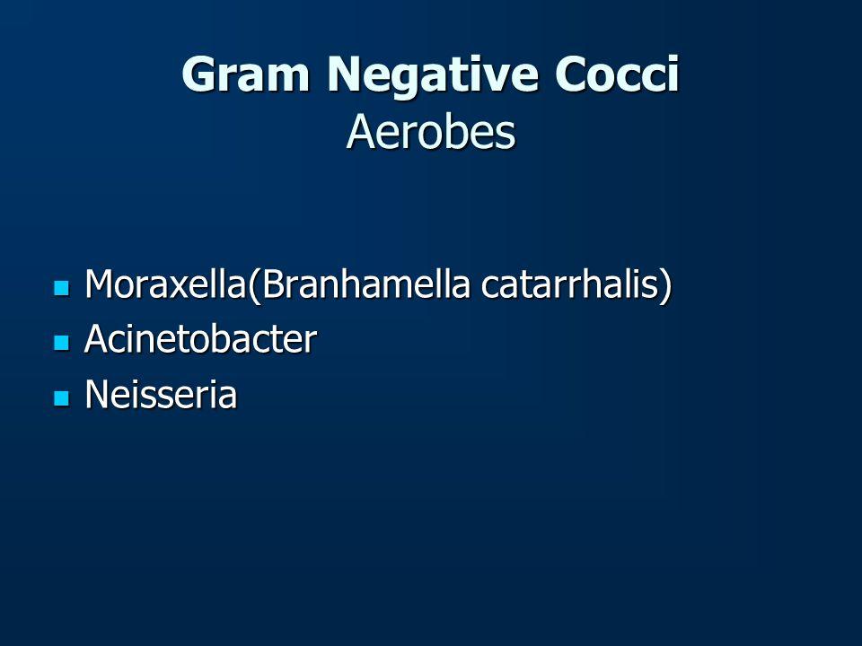 Gram Negative Cocci Aerobes