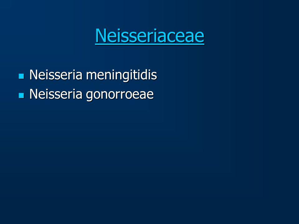 Neisseriaceae Neisseria meningitidis Neisseria gonorroeae
