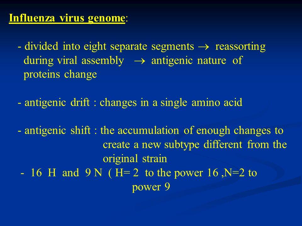 Influenza virus genome: