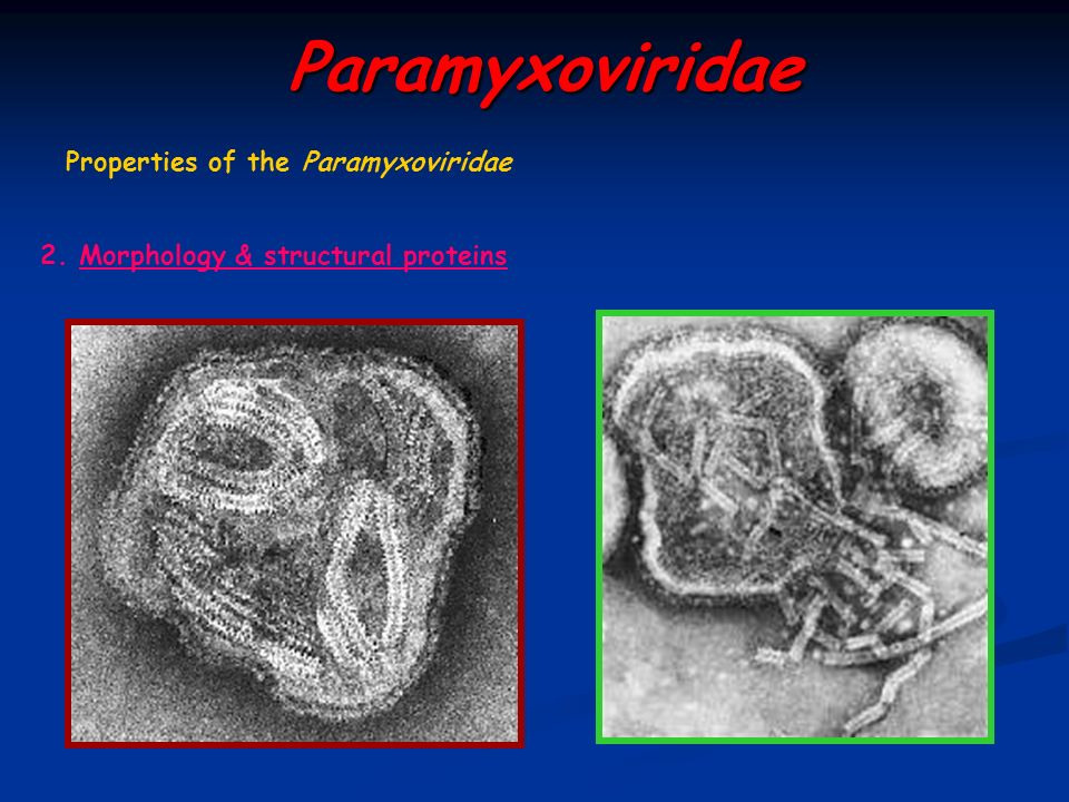 Paramyxoviridae Properties of the Paramyxoviridae
