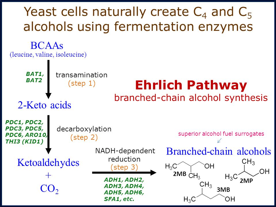 BCAAs Branched-chain alcohols. decarboxylation. (step 2) NADH-dependent reduction. (step 3) transamination.