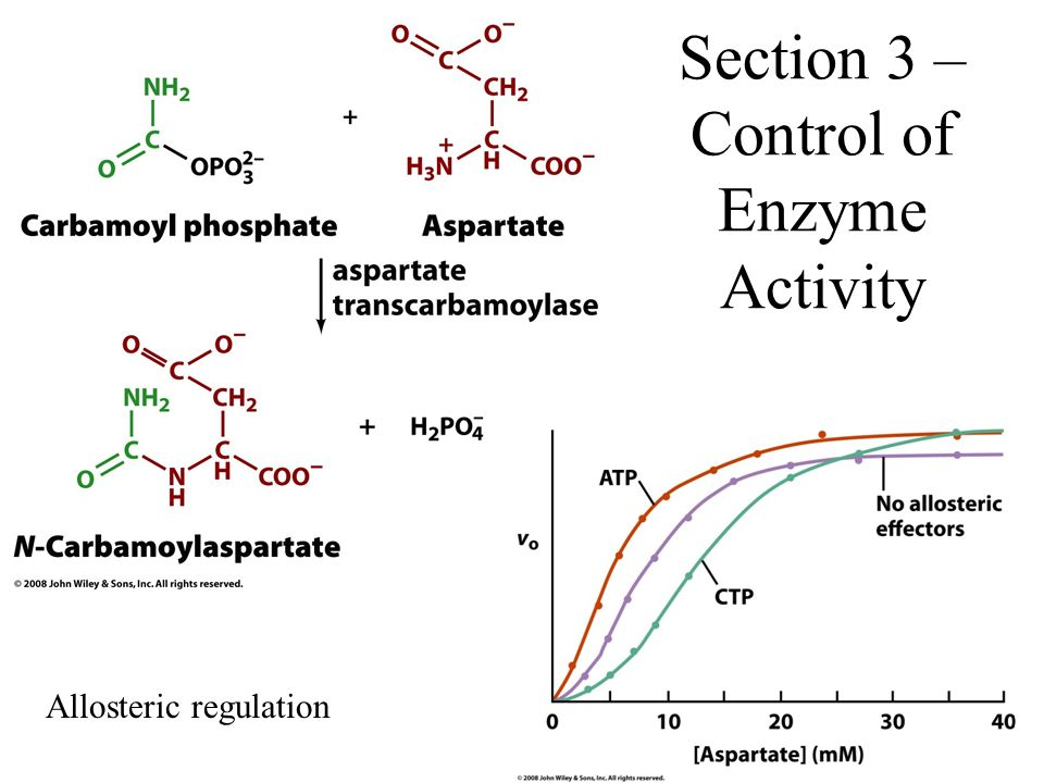 Section 3 – Control of Enzyme Activity