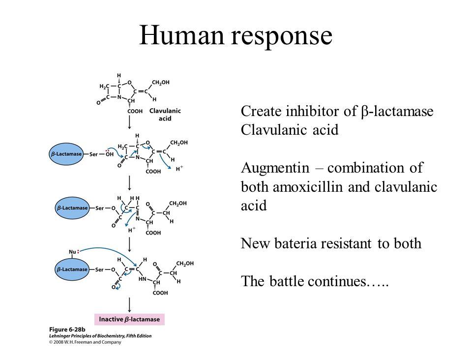Human response Create inhibitor of β-lactamase Clavulanic acid