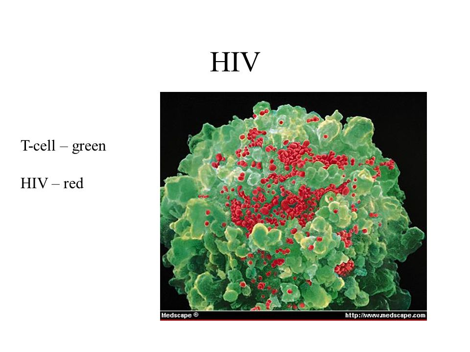 HIV T-cell – green HIV – red