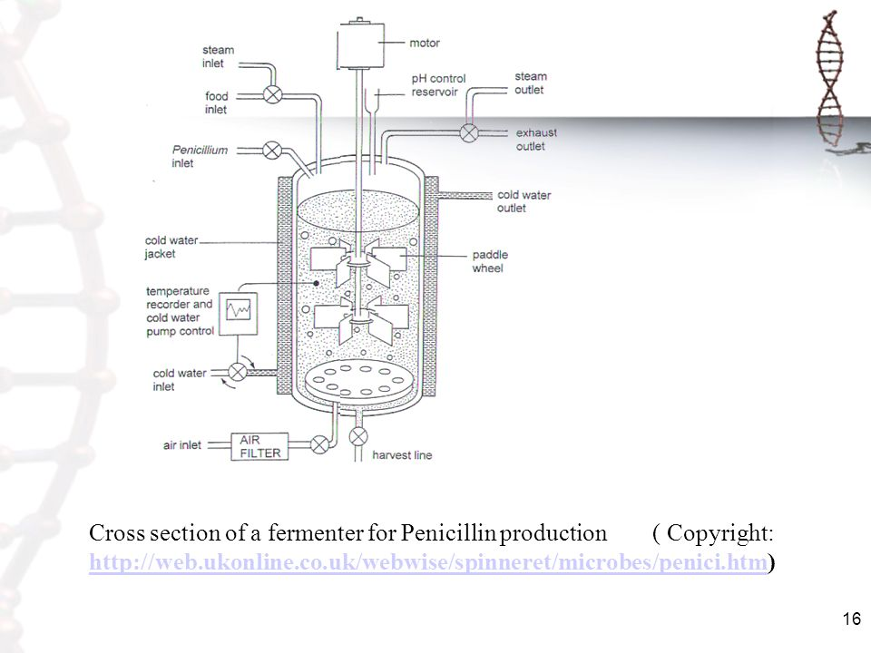 Cross section of a fermenter for Penicillin production ( Copyright: http://web.ukonline.co.uk/webwise/spinneret/microbes/penici.htm)