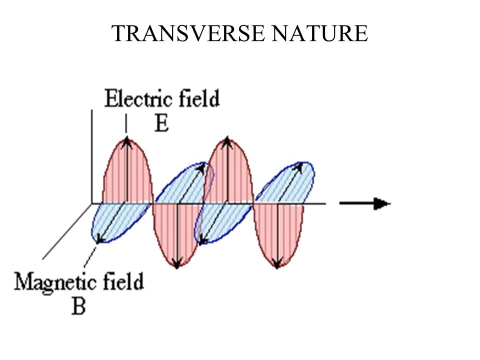 TRANSVERSE NATURE