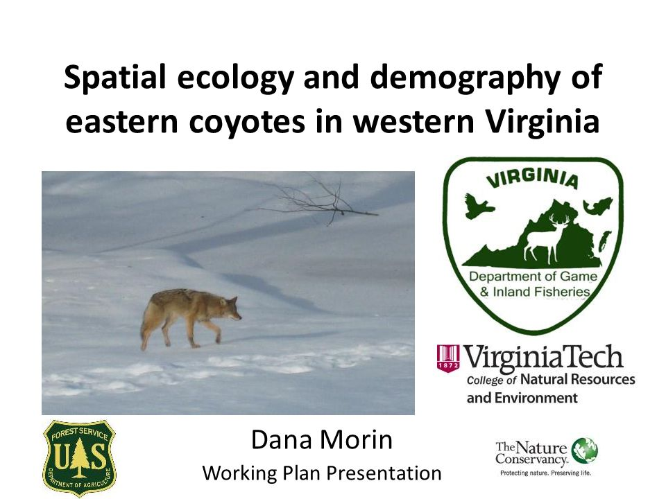 Spatial ecology and demography of eastern coyotes in western Virginia