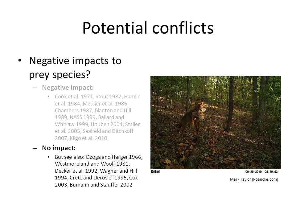 Potential conflicts Negative impacts to prey species Negative impact: