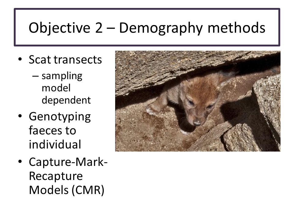 Objective 2 – Demography methods