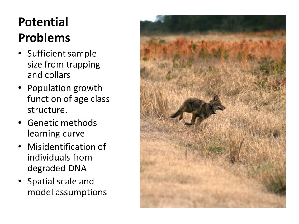 Potential Problems Sufficient sample size from trapping and collars