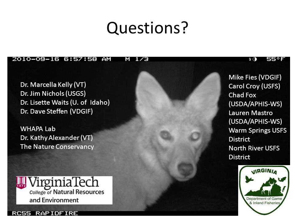 Questions Mike Fies (VDGIF) Carol Croy (USFS) Dr. Marcella Kelly (VT)