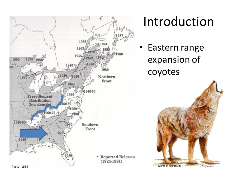Introduction Eastern range expansion of coyotes