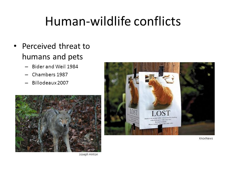 Human-wildlife conflicts