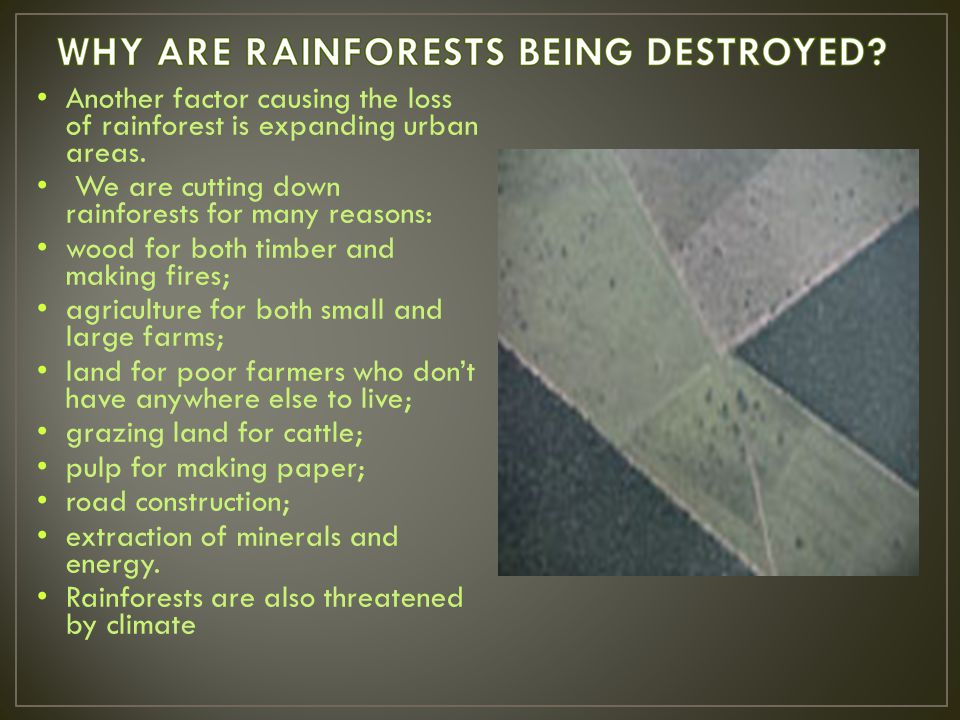 Another factor causing the loss of rainforest is expanding urban areas.