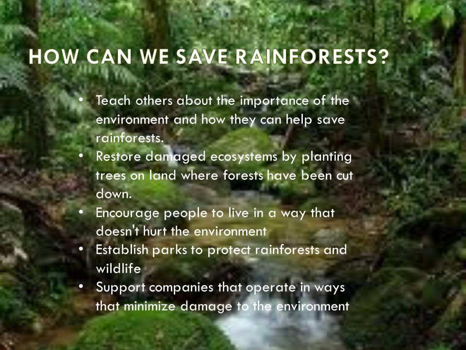HOW CAN WE SAVE RAINFORESTS