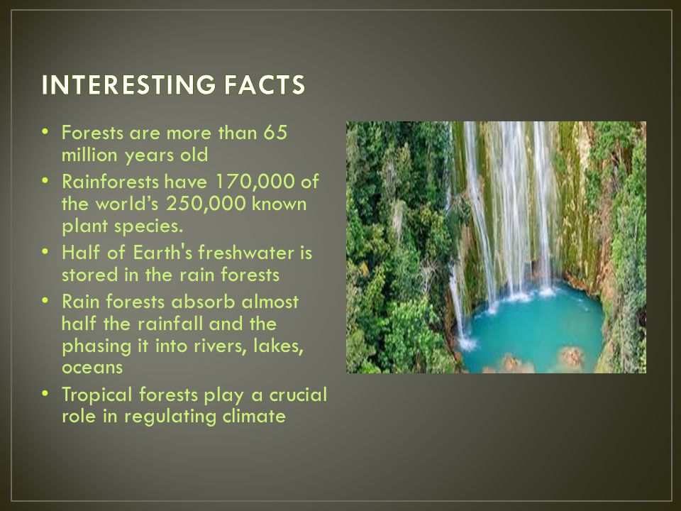 INTERESTING FACTS Forests are more than 65 million years old