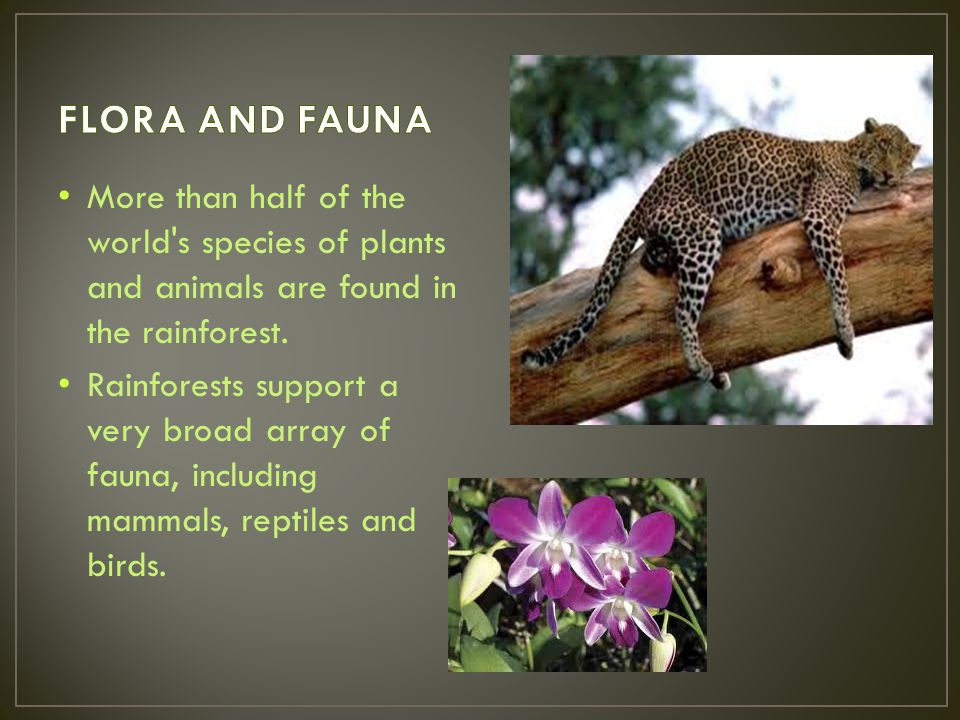 FLORA AND FAUNA More than half of the world s species of plants and animals are found in the rainforest.