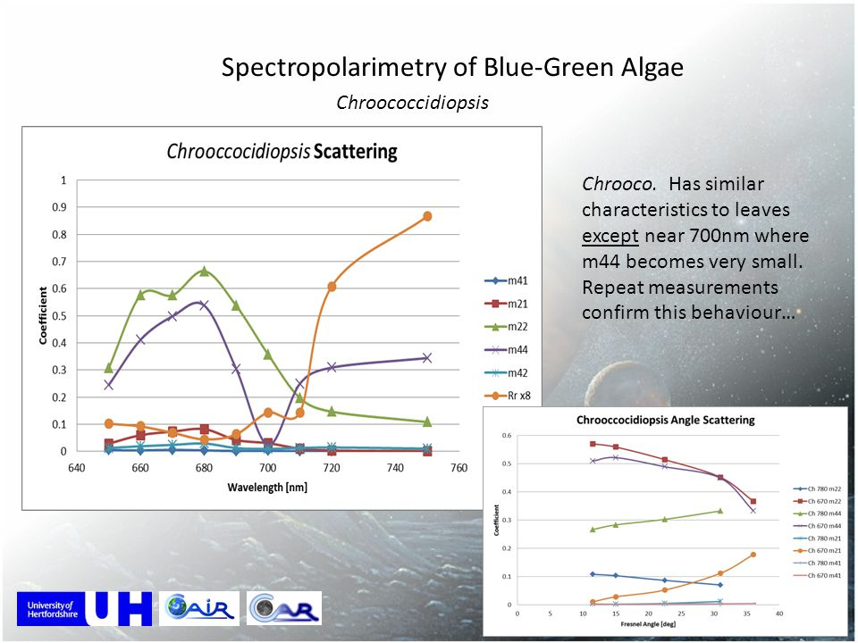 Spectropolarimetry of Blue-Green Algae