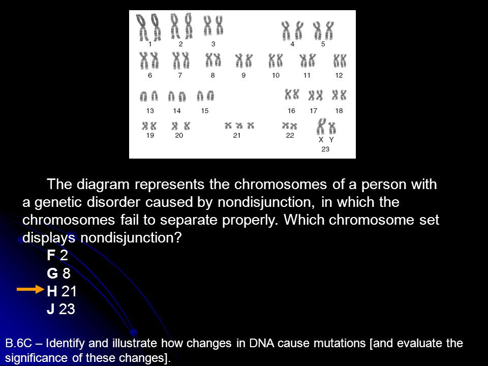 The diagram represents the chromosomes of a person with a genetic disorder caused by nondisjunction, in which the chromosomes fail to separate properly. Which chromosome set displays nondisjunction