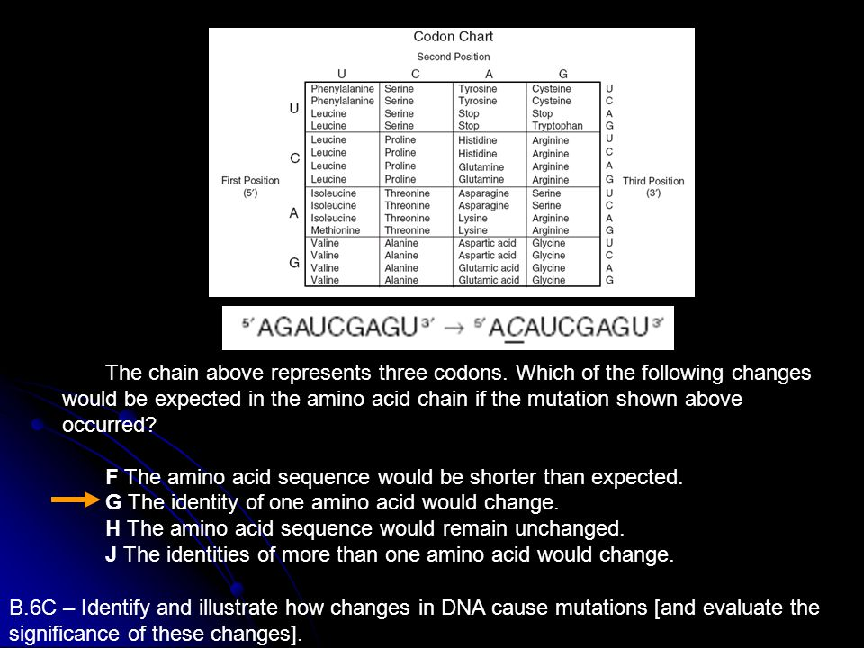 The chain above represents three codons