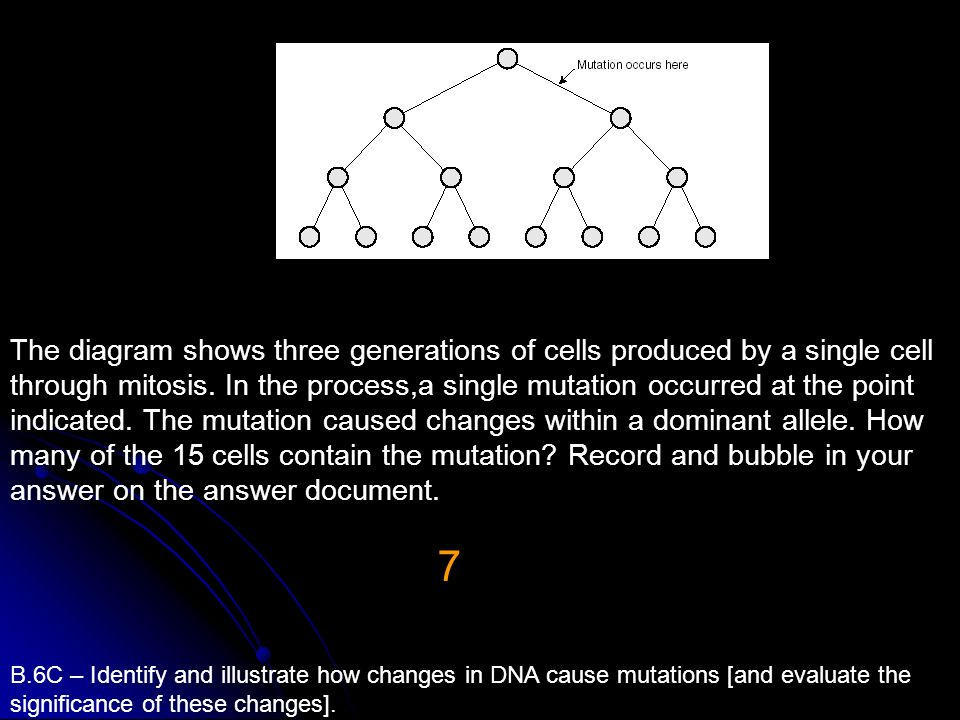 The diagram shows three generations of cells produced by a single cell through mitosis. In the process,a single mutation occurred at the point indicated. The mutation caused changes within a dominant allele. How many of the 15 cells contain the mutation Record and bubble in your answer on the answer document.