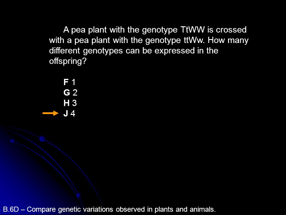 A pea plant with the genotype TtWW is crossed with a pea plant with the genotype ttWw. How many different genotypes can be expressed in the offspring