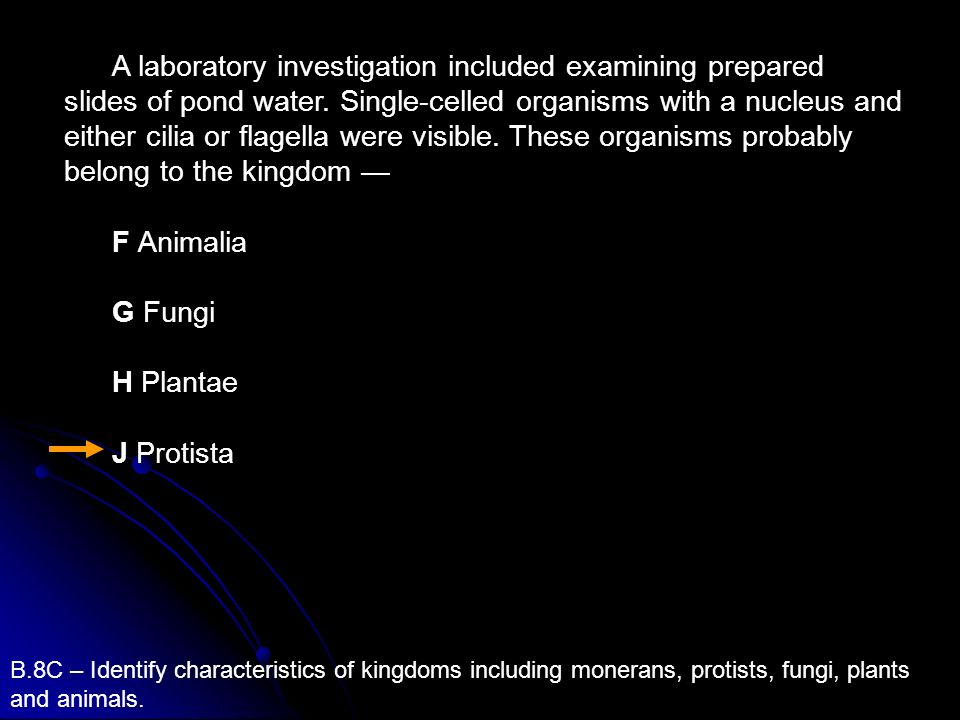 A laboratory investigation included examining prepared slides of pond water. Single-celled organisms with a nucleus and either cilia or flagella were visible. These organisms probably belong to the kingdom —
