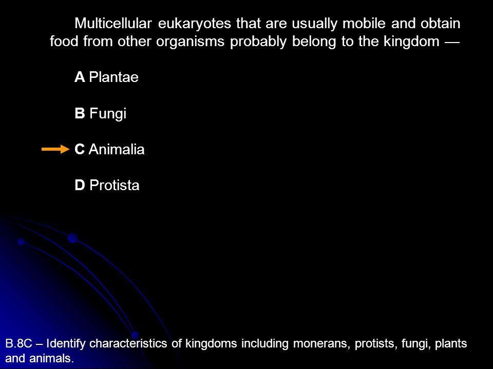 Multicellular eukaryotes that are usually mobile and obtain food from other organisms probably belong to the kingdom —