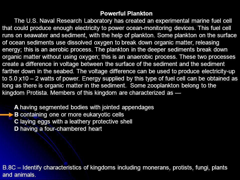 Powerful Plankton