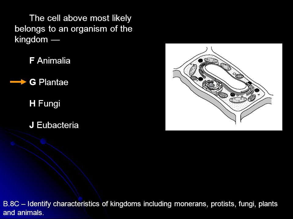 The cell above most likely belongs to an organism of the kingdom —