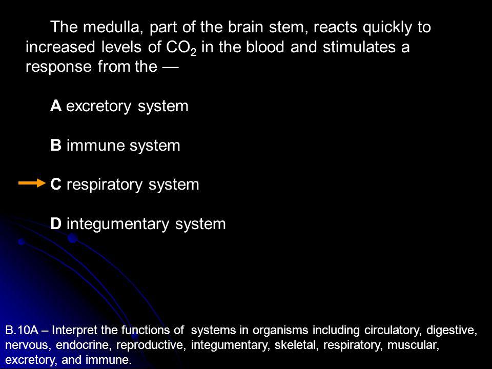 D integumentary system