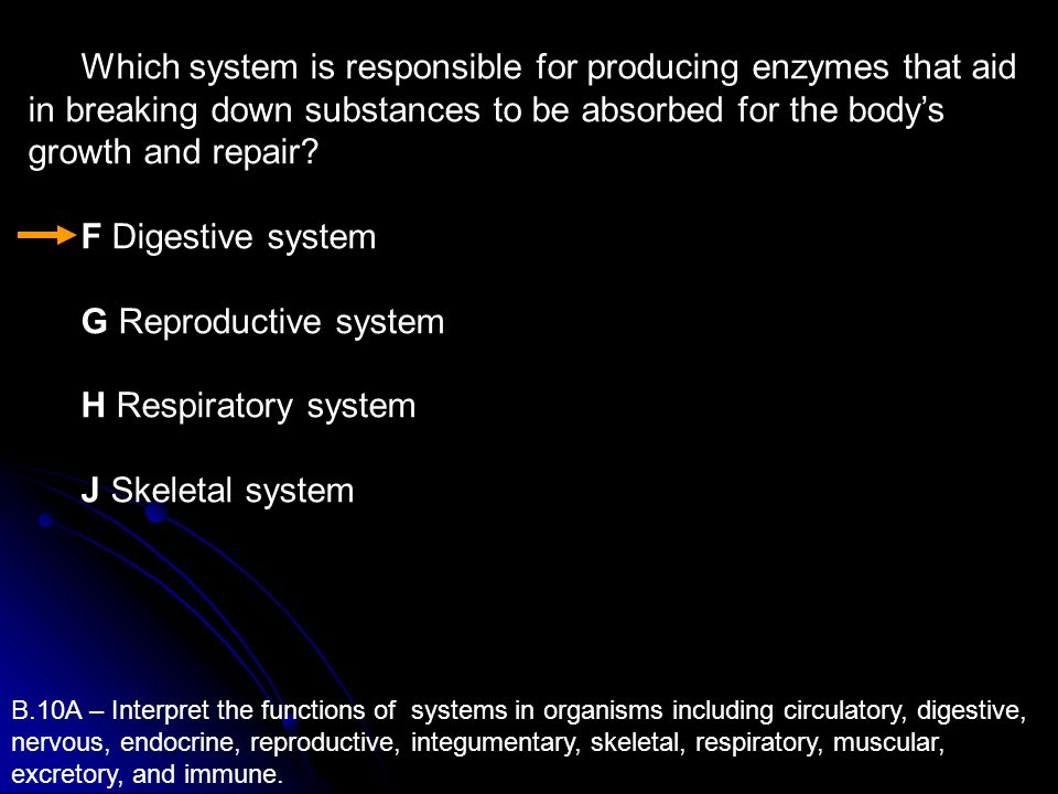 Which system is responsible for producing enzymes that aid in breaking down substances to be absorbed for the body's growth and repair
